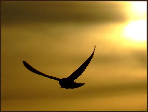 i-1ae97e479d537cd90379257cea6cc1fe-vogel_silhouette.jpg