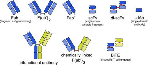i-d2a3d403ea677ba7eee845e01e245c1c-Engineered_monoclonal_antibodies-thumb-500x221.jpg