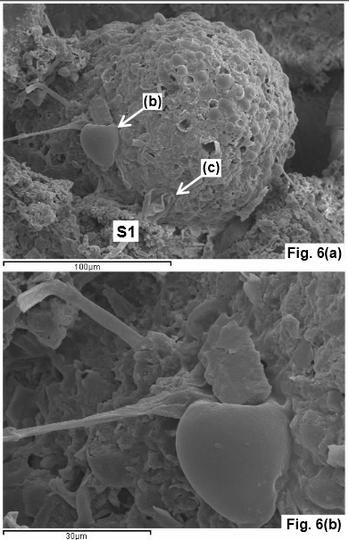 Angebliche Fossilien in Meteoriten (Bild: Wallis et al, 2013)
