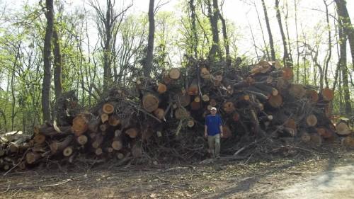 Es wurde ja nur ein bisschen Holz entfernt... (Bild: Johannes Nendwich)