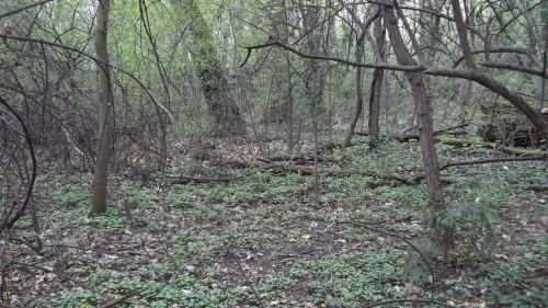 Verwilderte Wald im Sternwartepark (Bild: Johannes Nendwich)