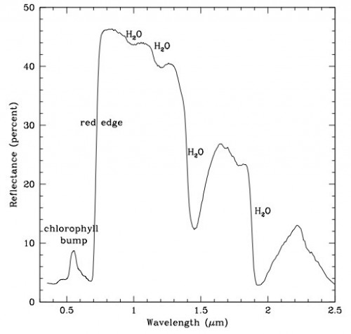 """""""Red Edge"""" (Bild: Seager et al, 2005)"""