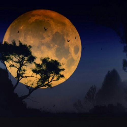 Ob super oder nicht: Der Mond ist schön! (Bild: Craig Deakin, CC-BY 2.0