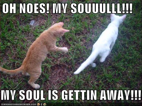 lolcat35-funny-pictures-kitten-soul-escapes