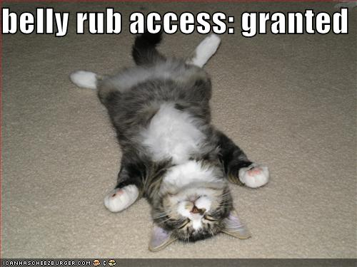 Streichelt liebe Katzenbabys, anstatt Angst vor unsinnigen Weltuntergängen zu haben!