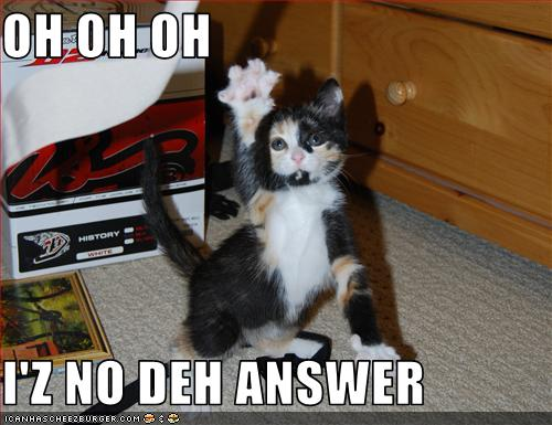 The_Cat_Knows_The_Answer