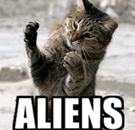 aliencat2