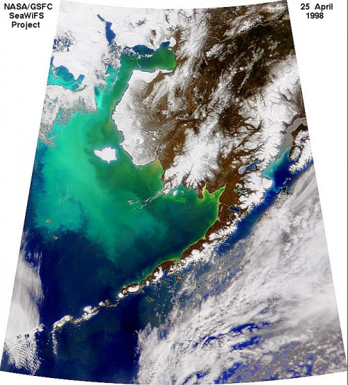 Plankton in der Beringsee (Bild:  SeaWiFS Project, NASA/Goddard Space Flight Center, and ORBIMAGE)