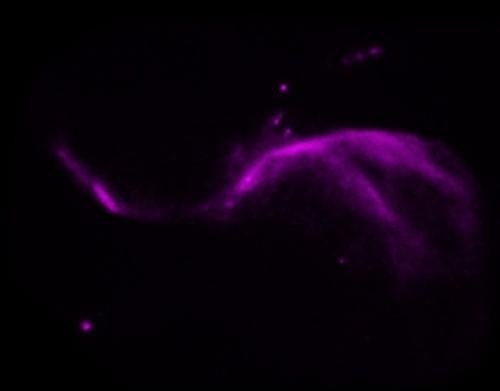 Bild: X-ray: NASA/CXC/Caltech/P.Ogle et al; Optical: NASA/STScI; IR: NASA/JPL-Caltech; Radio: NSF/NRAO/VLA
