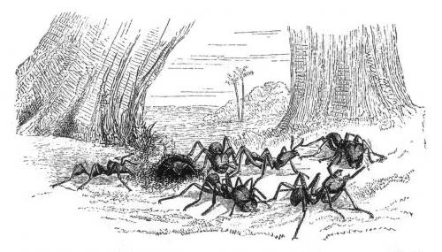 Die Ameisen diskutieren ob es sich lohnt, den Quatsch mit dem Gummiband mitzumachen... (Bild: Public domain)