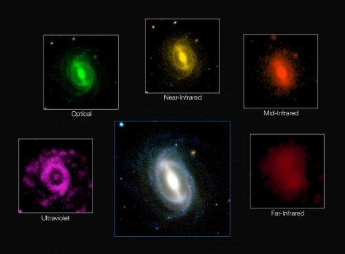 Galaxie aus dem GAMA-Katalog in unterschiedlichen Wellenlängen beobachtet (Bild: ICRAR/GAMA and ESO)