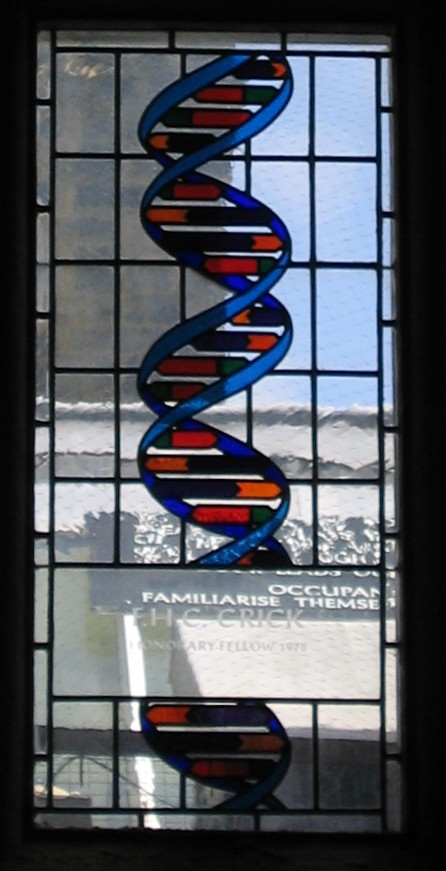 Buntglasfenster im Speisesaal des Caius-College in Cambridge, das zu Ehren von Francis Crick die DNA-Doppelhelix zeigt (Bild: Schutz, CC-BY-SA 2.5)