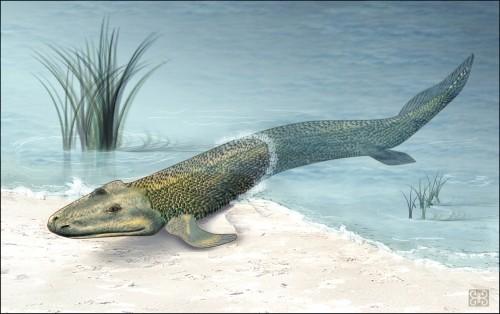 Künstlerische Darstellung von Tiktaalik, einem der ersten Wesen, das Liegestütze machen konnte  Bild: NSF, Zina Deretsky, public domain