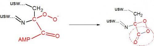 Das vorher negativ geladene Kohlenstoffatom bindet ein vorbeifliegendes Sauerstoffmolekül (O2), das im nächsten Schritt einen Ring bildet. Der eingekreisten Atomgruppe CO2 wird es gleich an den Kragen gehen.