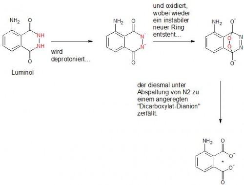 Die sogenannte Luminolreaktion, hier etwas vereinfacht dargestellt