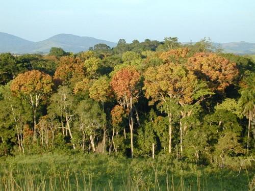 Nein, um diesen Wald geht es nicht... (Bild: NASA/JPL-Caltech)
