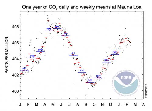 Jährliche Variation des CO2-Gehalts (Bild: NOAA)