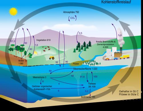 Der Kohlenstoffzyklus ist kompliziert ab es lohnt sich ihn aufzudröseln! (Bild: Brudersohn, gemeinfrei)