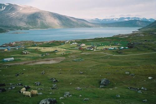 Mit etwas Glück kriegt man in Grönland mal ne grüne WIese... aber keinen Wein! (Bild: Public Domain)