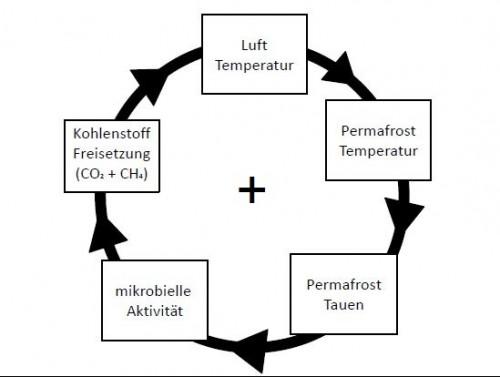Rückkopplungseffekt von Kohlenstoff im Permafrost (eigene Darstellung, https://www.awi.de/forschung/nachwuchsgruppen/peta-carb/kohlenstoff.htmlnach Strauss, J. 2015)