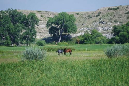 Pferde bei Fort Laramie, Wyoming, © Autor