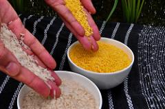 Keine Sorge, der Reis ist wirklich wegen des β-Carotins so gelb. (Urheber: International Rice Research Institute (IRRI), (cc-by-2.0))