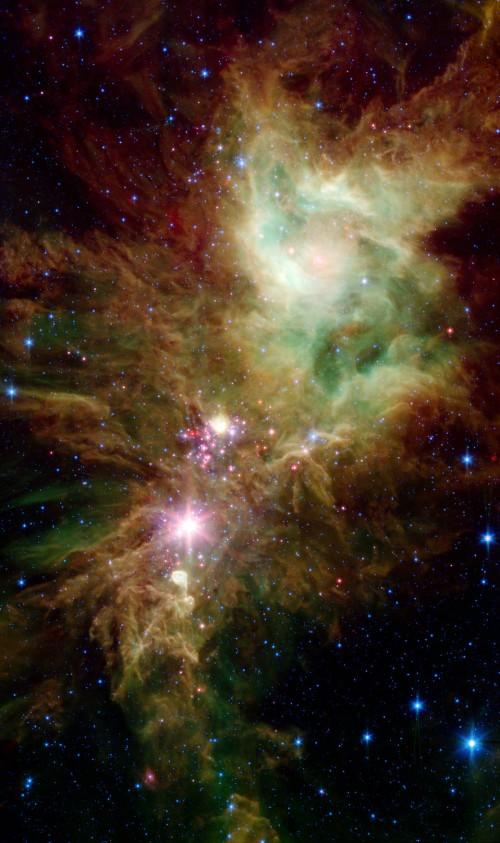 NGC 2264 mit Infrarotlicht (Bild: NASA/JPL-Caltech/P.S. Teixeira (Center for Astrophysics), Public Domain)