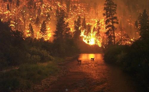 Keine Sorge! Der Wald brennt zwar, aber aus quantenmechanischer Sicht wird einfach nur ein wenig Information umsortiert (Bild: USDA, public domain)