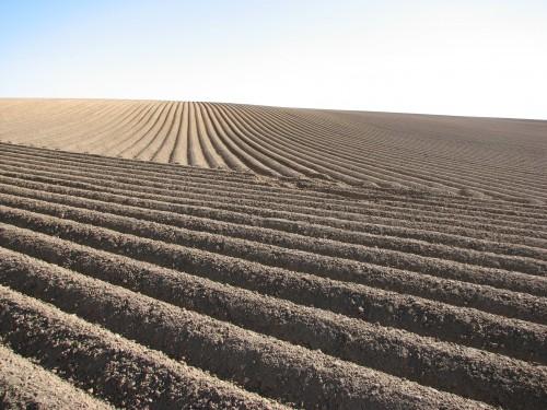 Ein Feld aus Quantenfeldern mit Kartoffeln aus Quantenfeldern unter der Erde (aus Quantenfeldern) (Bild: Public Domain)
