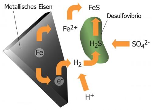 Desulfurizierende Bakterien wie die Gattung  Desulfovibro gewinnen ihre Energie aus der Sulfatreduktion. Dazu benötigen sie weder Sauerstoff noch Sonnenlicht. In wässriger Umgebung gibt Eisen (Fe) Eisen(II)-Ionen (Fe2+) ab. Metalle wie Eisen geben leicht Elektronen (e-) ab, welche mit Wasserstoff-Ionen (H>+) zu Wasserstoff (H2) regieren. Die Bakterien bilden aus Wasserstoff und Sulfat-Ionen (SO42-) Schwefelwasserstoff (H2S). Diese Reaktion dient den Bakterien als Energiequelle. Schwefelwasserstoff reagiert mit Eisen‑2-Ionen zu Eisen(II)sulfid (FeS). (Urheber: William Crochot, Bildrechte: Creative Commons CC BY-SA 4.0)