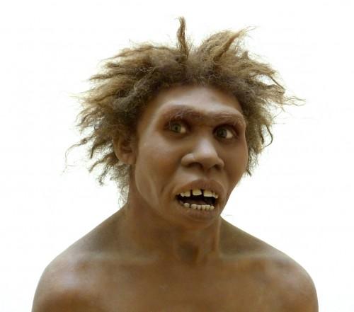 """Hier sehen sie den Homo Ergaster, unseren Vor-vor-vor-ein-paar-weniger-""""vor-""""sind-jetzt-nötig-fahren. Zu beachten ist die unbehaarte dunkle Haut (Bild: Wolfgang Sauber (photograph); E. Daynes (sculpture), CC-BY-SA 4.0)"""