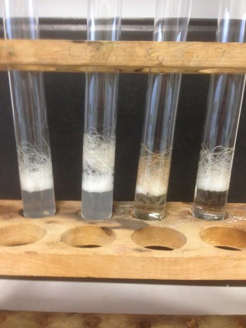 Hier zwei Impressionen von meinem selbst durchgeführten Experiment: Haare am Beginn einer Blondierung mit Wasserstoffperoxid und die Produkte.