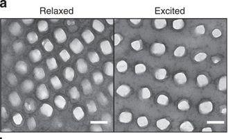 """Extreme Nahaufnahme der Nanokristalle aus Guanin vor und während Aufregung; J.Teyssier, """"In-vivo skin colour change in chameleons is reproduced ex vivo """" https://www.nature.com/articles/ncomms7368#abstract ist lizensiert über eine Creative Commons Lizenz: http://creativecommons.org/by/4. Das Ausgangsbild wurde durch El Itai zugeschnitten."""