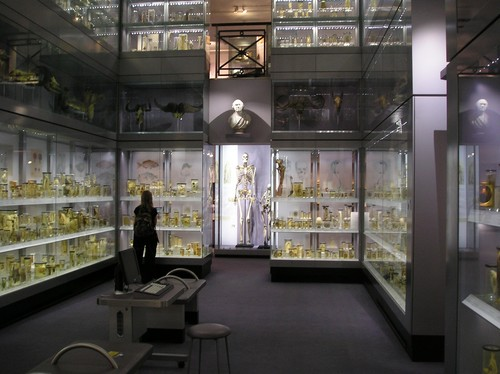 i-526920e7d0224fc90362b0254eb124f6-Hunterian_Collection-thumb-500x374.jpg