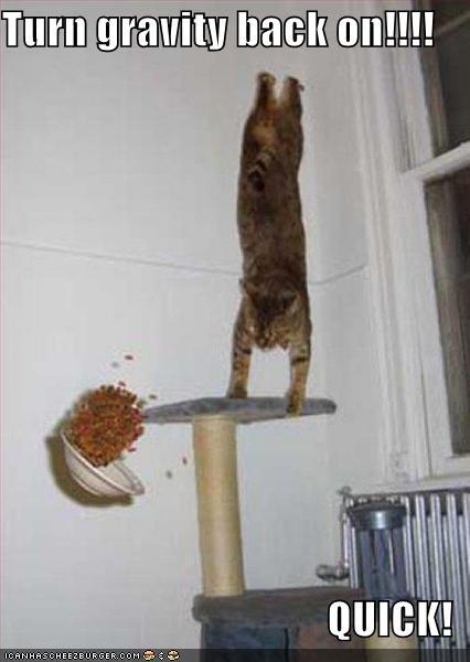 i-572d73f353f7b27a7ec0d25609c54097-funny-pictures-gravity-cat.jpg