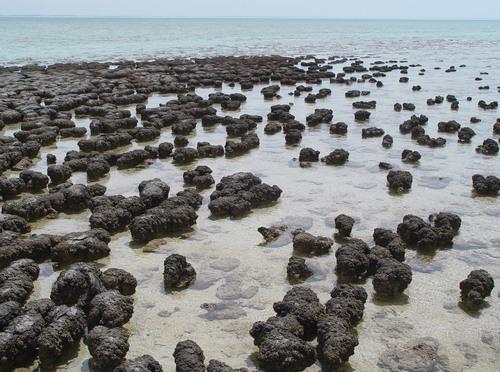 i-5b4ad6776d35b1eea52b4e507b9efc6a-Stromatolites_in_Sharkbay-thumb-500x372.jpg
