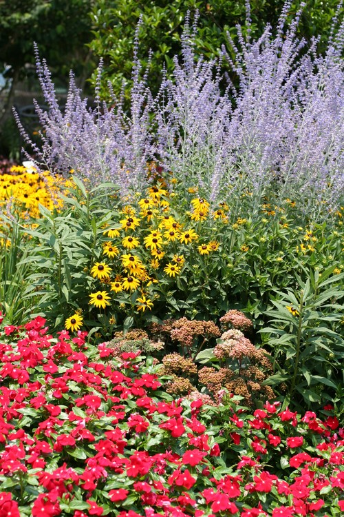 i-5c8c7f7331d60d4542c6beb6a57a8ae9-Flowers_in_Park_Seed_Company_garden-thumb-500x750.jpg