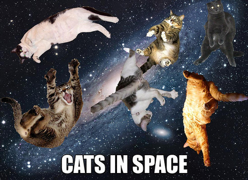 i-627007792079b28f3b5c186a66a624b5-catsinspace.jpg