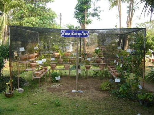 i-771b5c774049f745c5001c4230e2fb33-Medicinal_herbs_garden_hospital-thumb-500x375.jpg