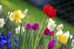i-a09a51d948dc532c73db5b1dee349696-800px-Colorful_spring_garden-thumb-150x99.jpg