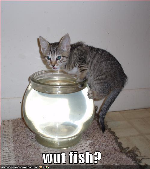 i-db5c025090d89036b351f990ba8e35ae-funny-pictures-cat-drinks-fishbowl.jpg