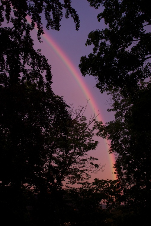 i-efa1fee970dee1acb2c004cdd125df19-regenbogen-kampfflunder2-thumb-500x750.jpg