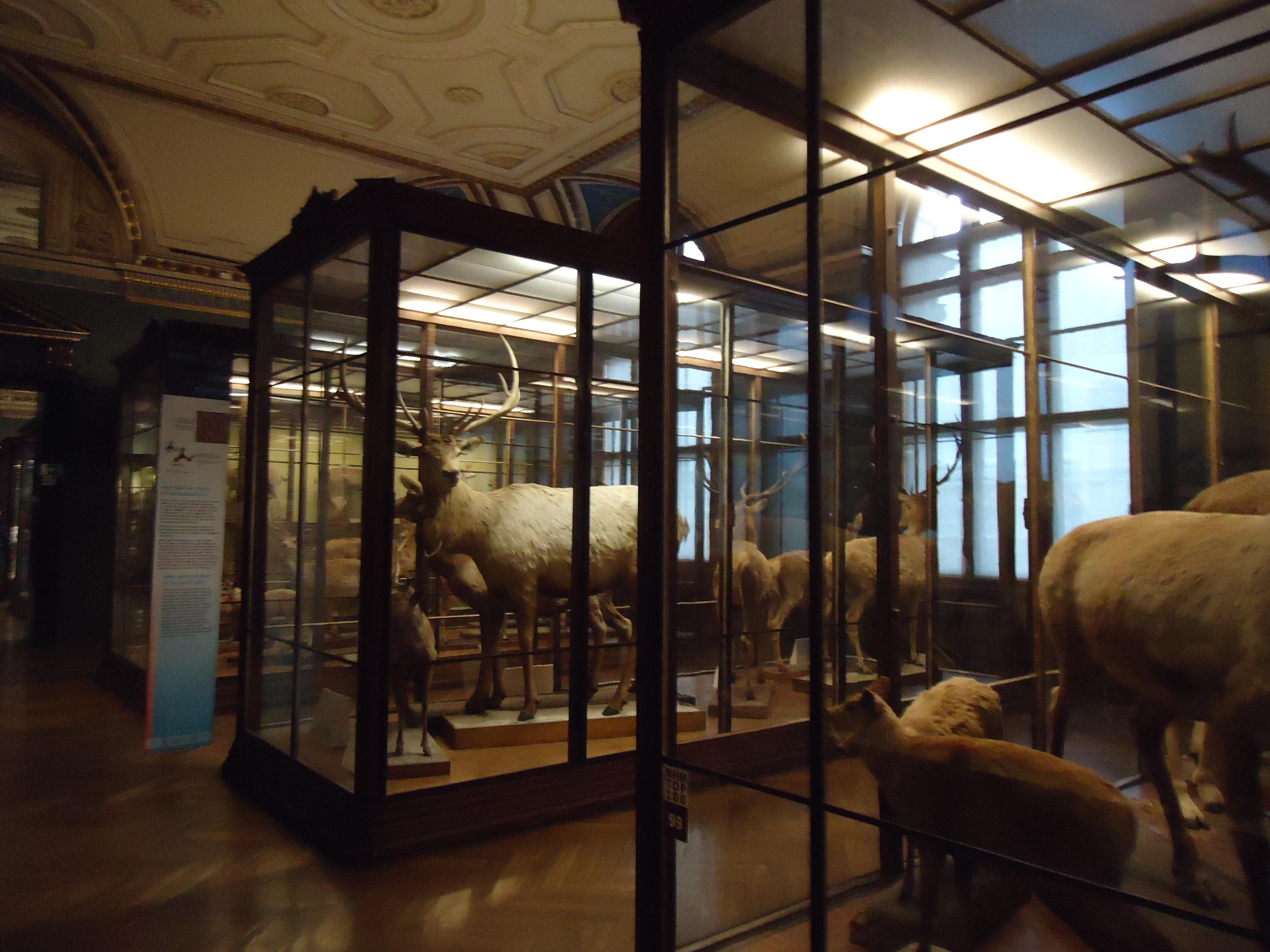 geht in das naturhistorische museum in wien astrodicticum simplex. Black Bedroom Furniture Sets. Home Design Ideas