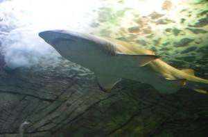 im SeaLife in Sydeny