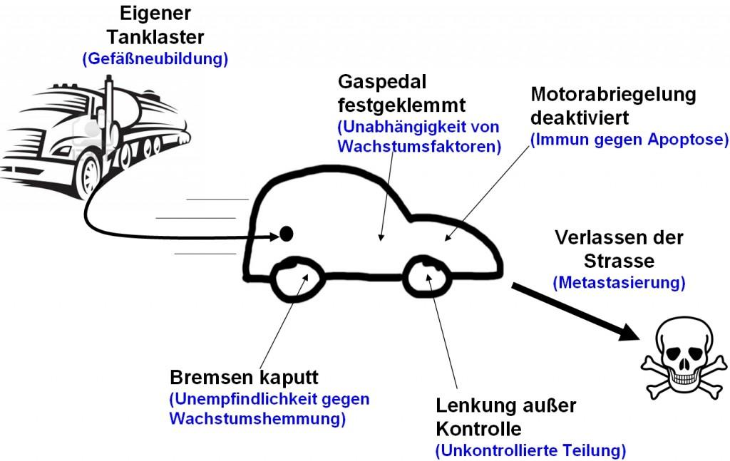 8 auto analogie