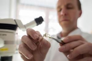 forensischer Botaniker bei der Arbeit Quelle: dpa