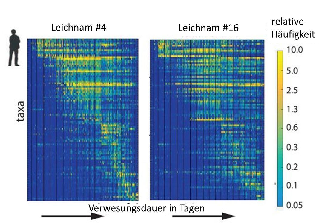 Lorarithmisch skalierte Heatmap (Häufigkeitsdarstellung) operationaler taxonomischer Einheiten (OTUs) auf der Haut menschlicher Leichen. Jede Zeile entspricht einem Taxon. Man erkennt, wie sich mit der Zeit die Häufigkeit der verschiedenen Taxa verändert und wie ähnlich das entstehende Muster bei verschiedenen Leichen ist. aus [1]