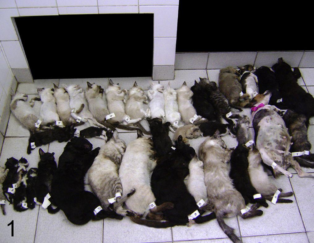 WTF Forensik – Ein Tierserienmord in Brasilien