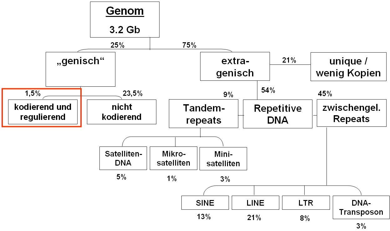 i-14b84b1eefb4a9f5c6628c4aea9ec303-genom.jpg