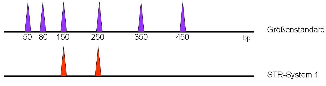 i-715c4d0dbe95f737b7c3b60b0f97bc92-multiplex04.jpg